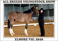 All Breeds Youngstock Show Elmore 2016