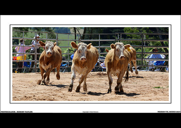 NEERIM RODEO 2017 - WEB - (11)