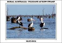 Rural Australia - Pelicans At Kow Swamp