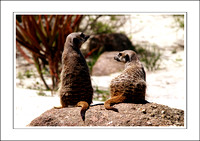 WERRIBEE ZOO 2007 - A3 B - (2)