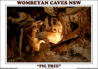 "Wombeyan Caves NSW 2016 ""Fig Tree"""
